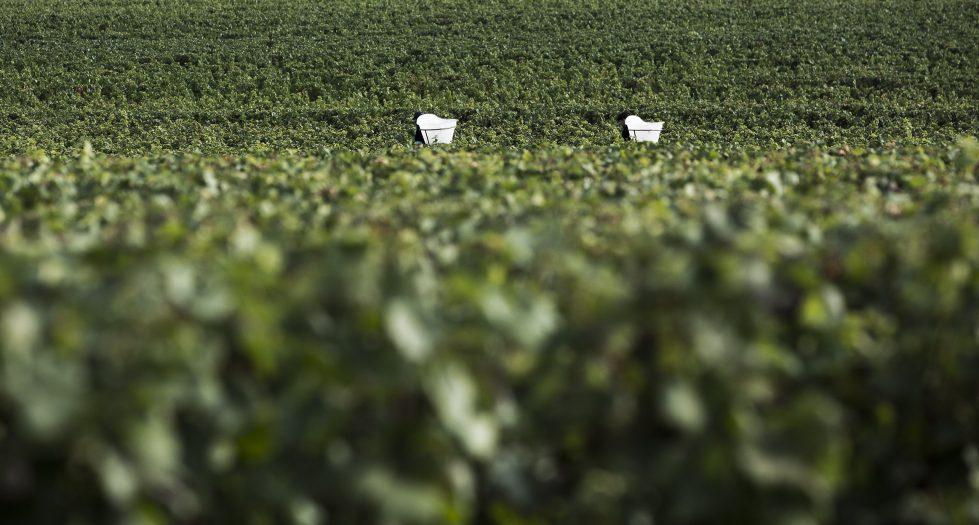 Bourgogne Clos-de-Vougeot Grand Cru