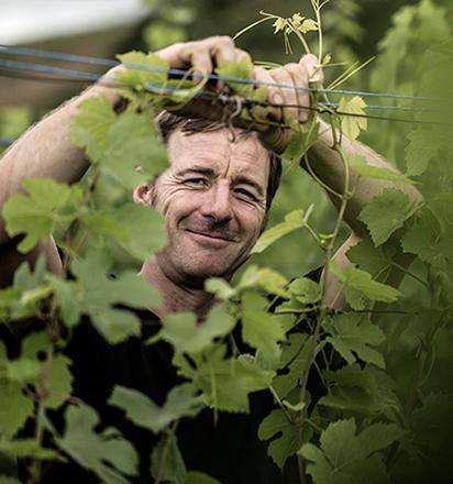 Vignerons - Laurent barth