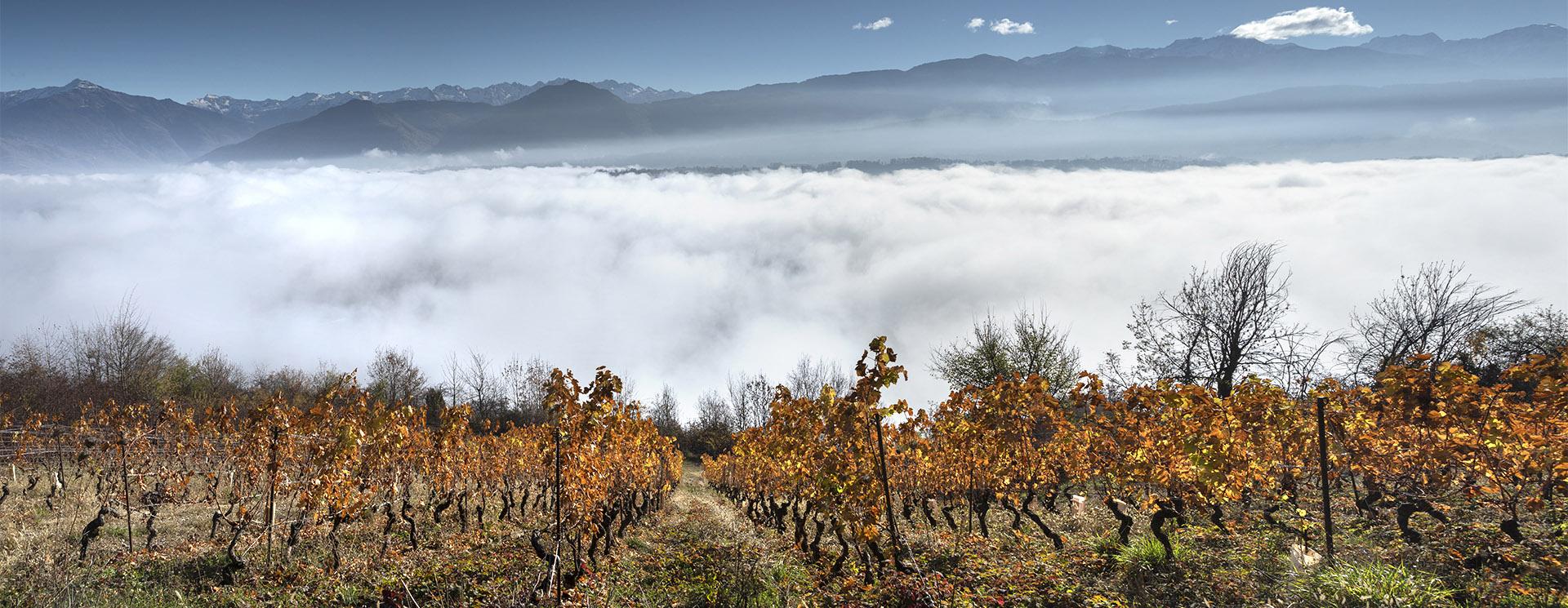 Viamo - Nicolas Ferrand - Domaines des Côtes Rousses