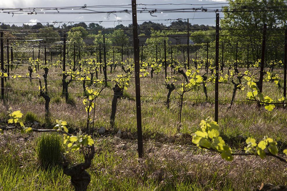 Viamo - Guilhem Barre vin du Languedoc