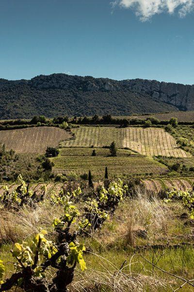 Viamo - Domaine Paul Meunier-Centernach - Roussillon