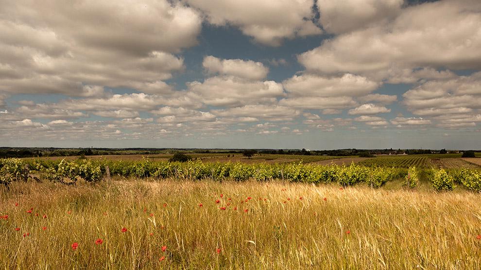 Laura David - Montlouis sur Loire