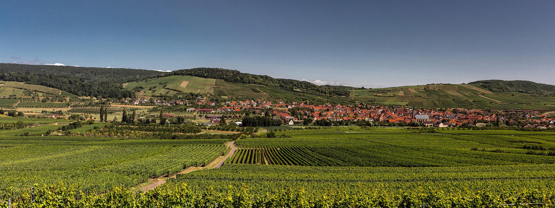 Domaine Étienne LOEW - Alsace - Westhoffen
